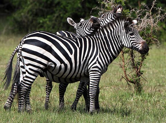 Lake Mburo Safaris Uganda